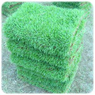ขายหญ้า